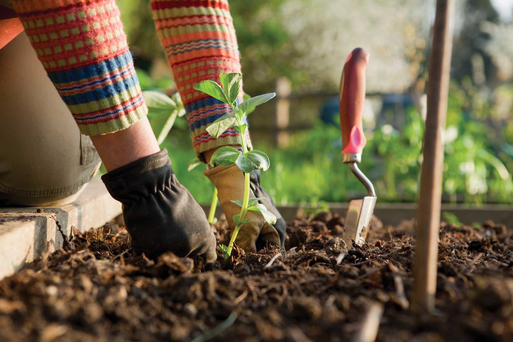 garden planting. every year i find myself searching the vast reaches of internet looking for new monthly garden \u201cto do\u0027s,\u201d especially in off months late winter. planting