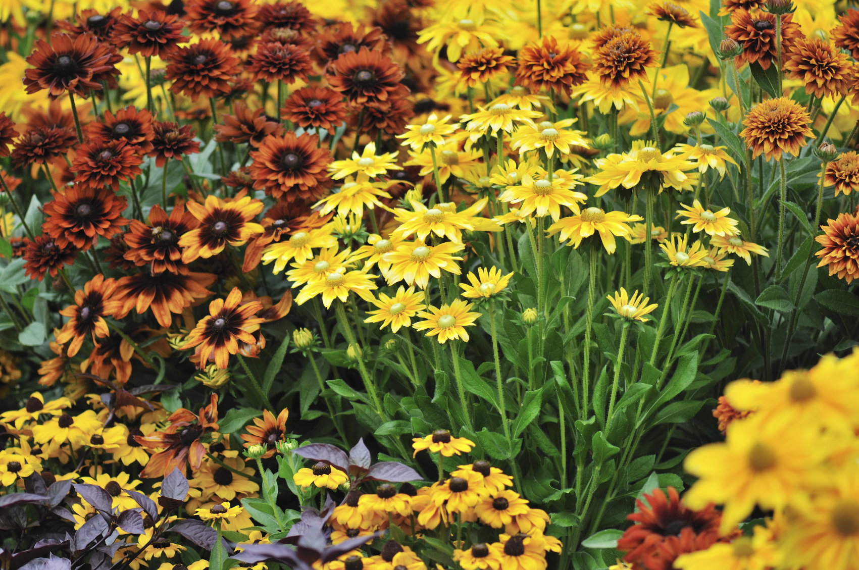 Bucks country gardens fall interest perennials for the garden izmirmasajfo